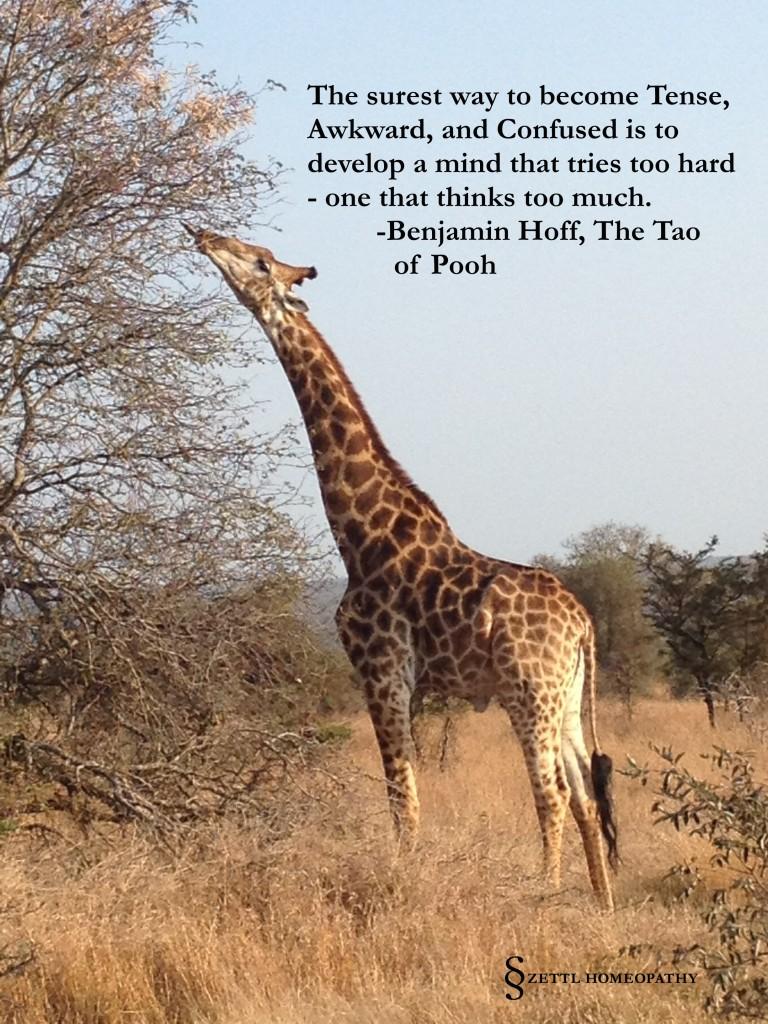 giraffe hoff