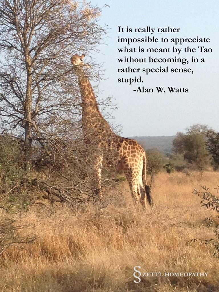 giraffe watts