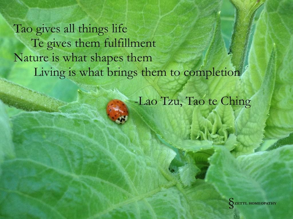 ladybug tao quote