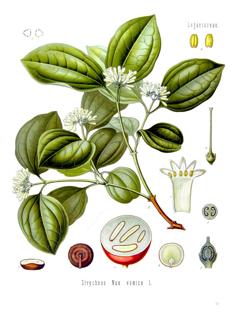 nux vomica for mild indigestion