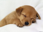 Sleep articles