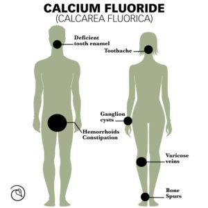 Calc fluor cell salt for bones, teeth, and connective tissue